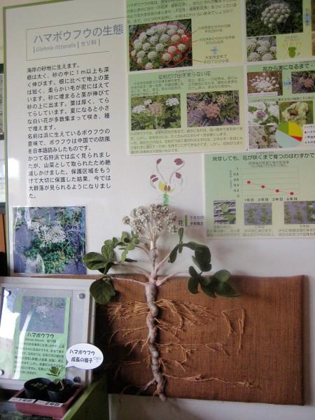 当別・石狩 劉連仁の足跡をたどるツアー 2011年7月3日 �