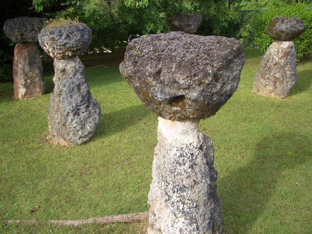日本平和委員会 グアムピースツアー 2012年2月6日〜10日